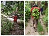 jungle15
