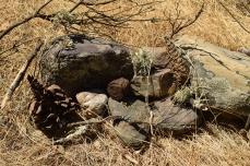 Mapcho Altar