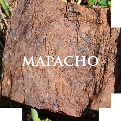plant-mapacho